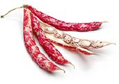 borlotto-rosso beans